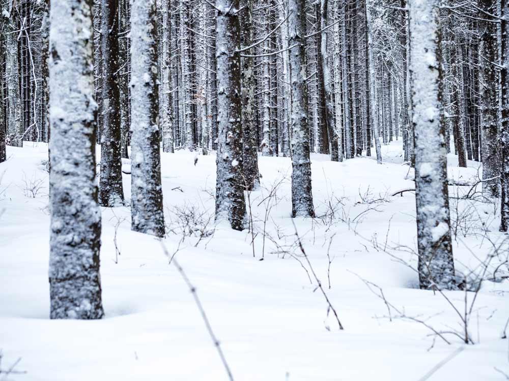 joggen-im-winter-schnee